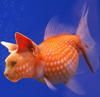 tinder_catfish